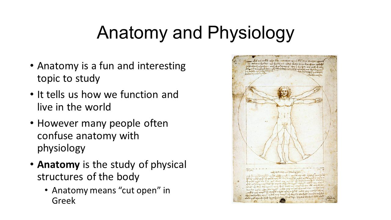 Introduction To Anatomy. Anatomy and Physiology Anatomy is a fun and ...