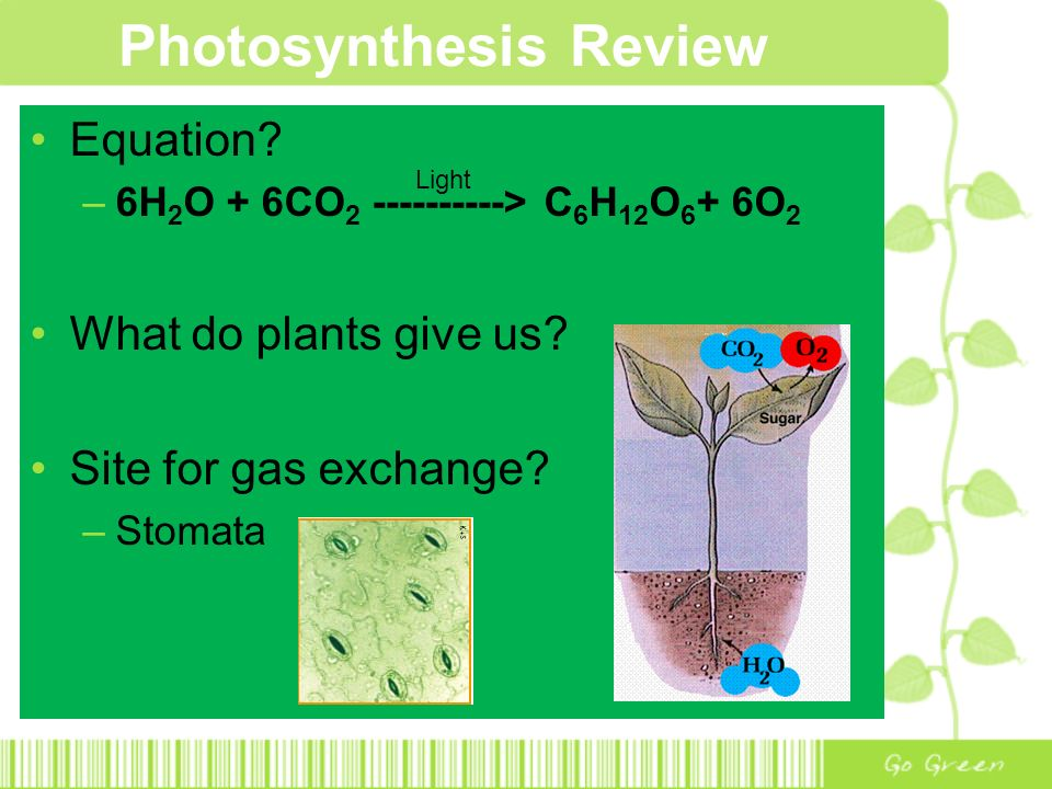 Photosynthesis Review Equation.