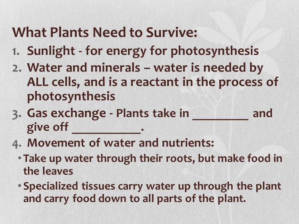 What Plants Need to Survive: 1.Sunlight - for energy for photosynthesis 2.Water and minerals – water is needed by ALL cells, and is a reactant in the process of photosynthesis 3.Gas exchange - Plants take in _________ and give off ___________.