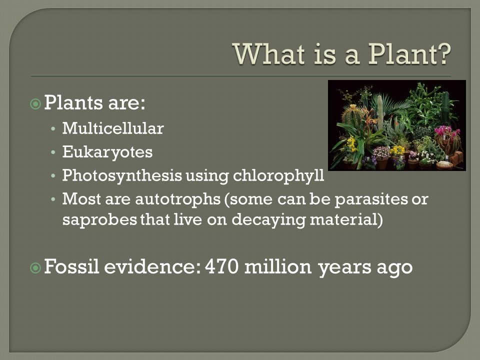  Plants are: Multicellular Eukaryotes Photosynthesis using chlorophyll Most are autotrophs (some can be parasites or saprobes that live on decaying material)  Fossil evidence: 470 million years ago