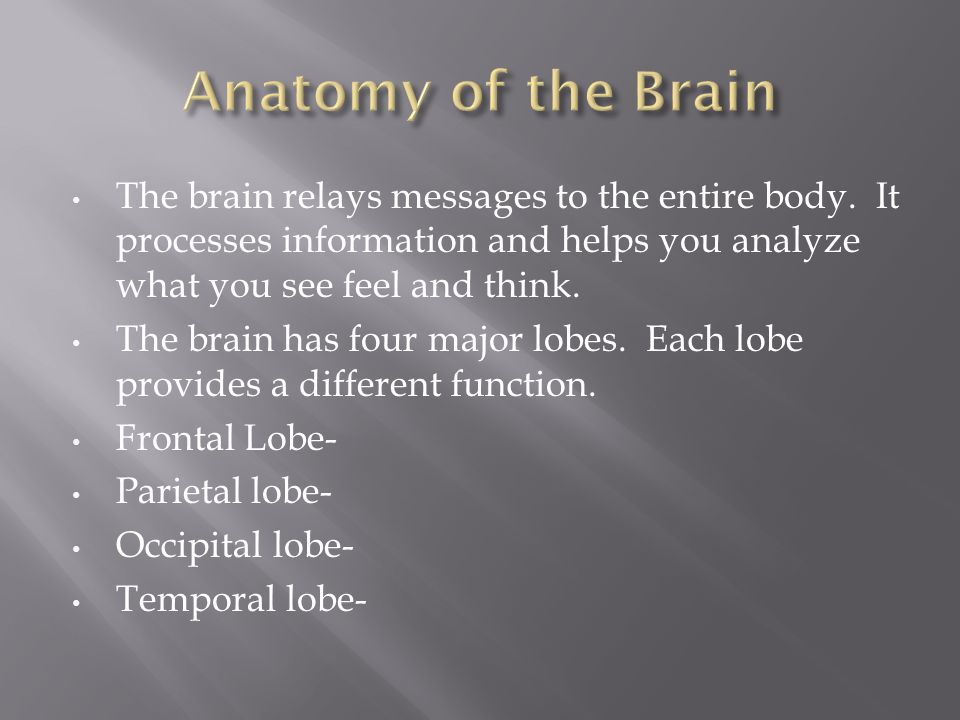 The brain relays messages to the entire body.