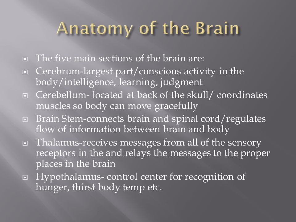  The five main sections of the brain are:  Cerebrum-largest part/conscious activity in the body/intelligence, learning, judgment  Cerebellum- located at back of the skull/ coordinates muscles so body can move gracefully  Brain Stem-connects brain and spinal cord/regulates flow of information between brain and body  Thalamus-receives messages from all of the sensory receptors in the and relays the messages to the proper places in the brain  Hypothalamus- control center for recognition of hunger, thirst body temp etc.