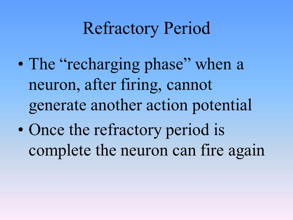 Refractory Period The recharging phase when a neuron, after firing, cannot generate another action potential Once the refractory period is complete the neuron can fire again