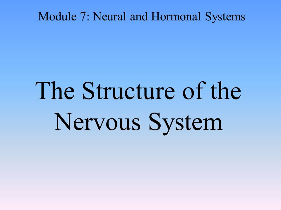The Structure of the Nervous System Module 7: Neural and Hormonal Systems