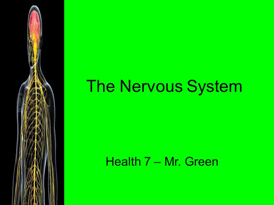 The Nervous System Health 7 – Mr. Green