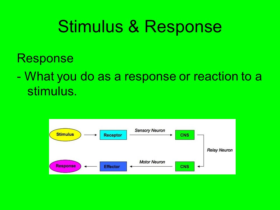 Stimulus & Response Response - What you do as a response or reaction to a stimulus.
