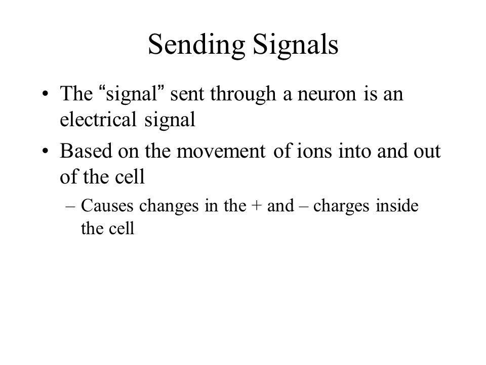 Question… What is the general pathway of a signal through a neuron.