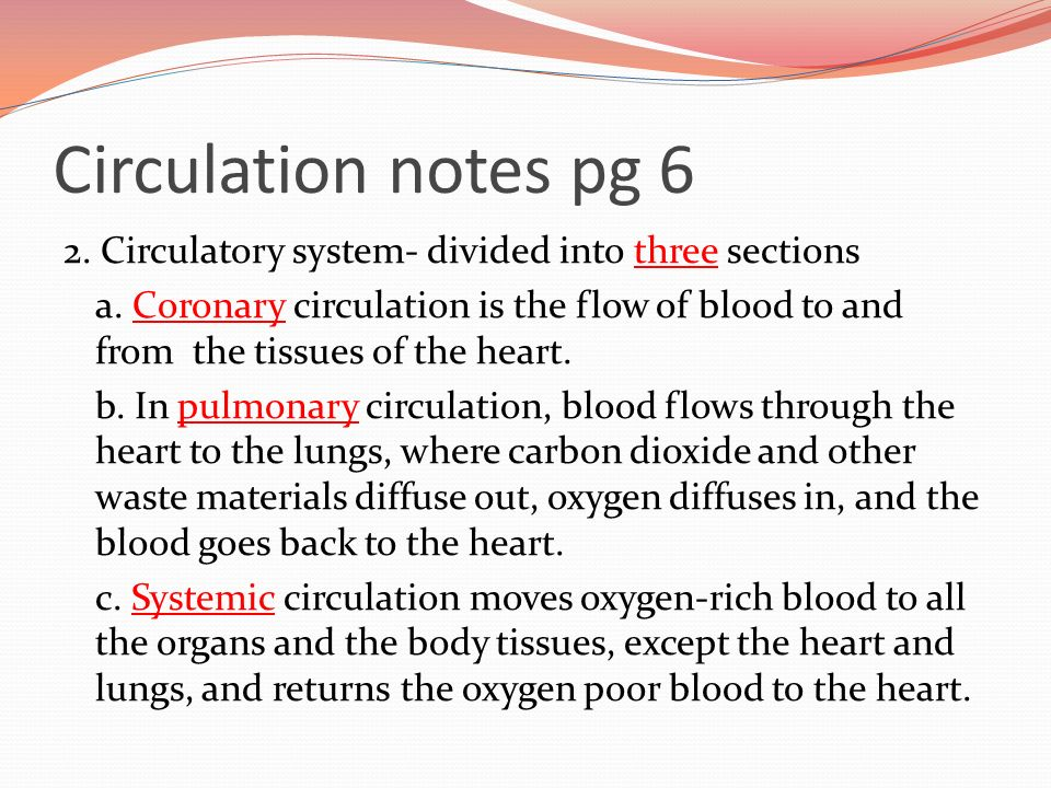 Circulation notes pg 6 2. Circulatory system- divided into three sections a.