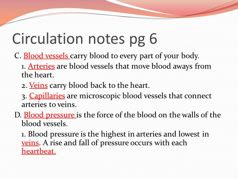 Circulation notes pg 6 C. Blood vessels carry blood to every part of your body.