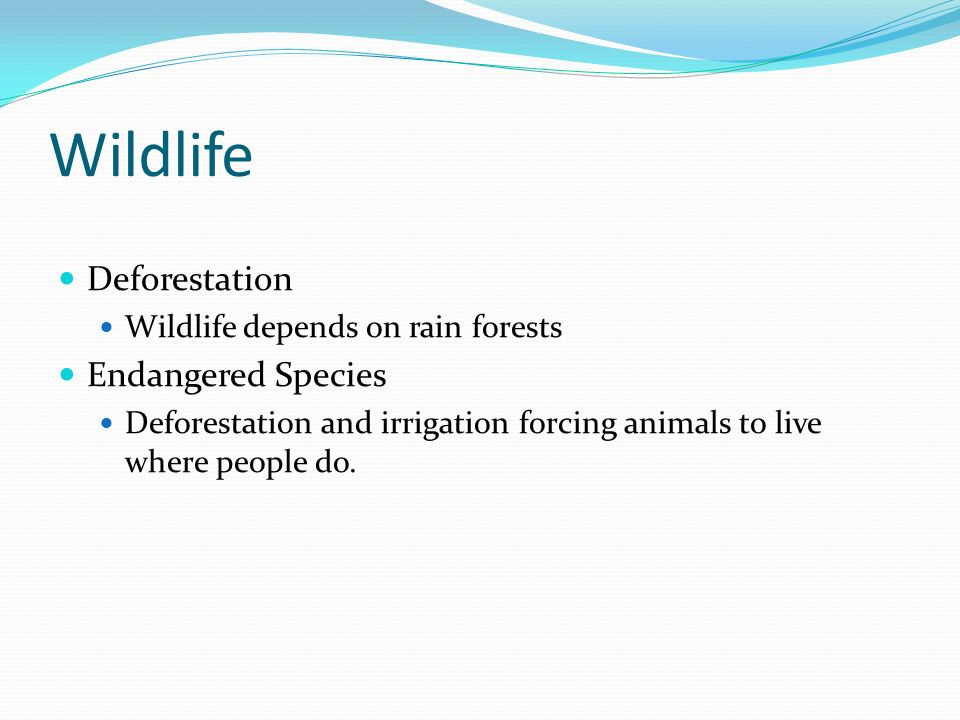 Wildlife Deforestation Wildlife depends on rain forests Endangered Species Deforestation and irrigation forcing animals to live where people do.