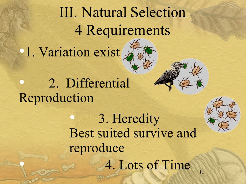 11 III. Natural Selection 4 Requirements 1. Variation exist 2.
