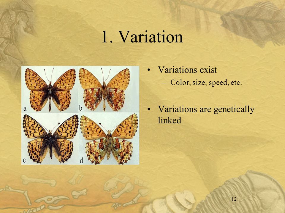 12 1. Variation Variations exist –Color, size, speed, etc. Variations are genetically linked