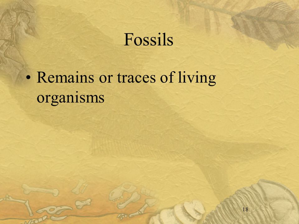 18 Fossils Remains or traces of living organisms