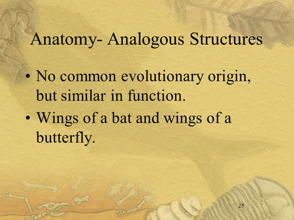 25 Anatomy- Analogous Structures No common evolutionary origin, but similar in function.