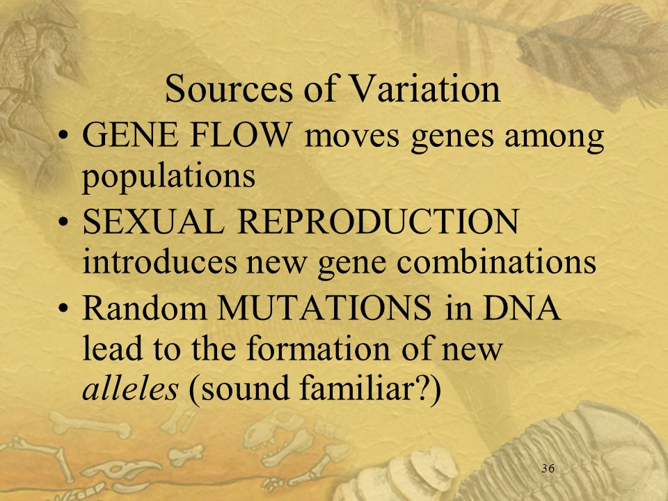 36 Sources of Variation GENE FLOW moves genes among populations SEXUAL REPRODUCTION introduces new gene combinations Random MUTATIONS in DNA lead to the formation of new alleles (sound familiar )