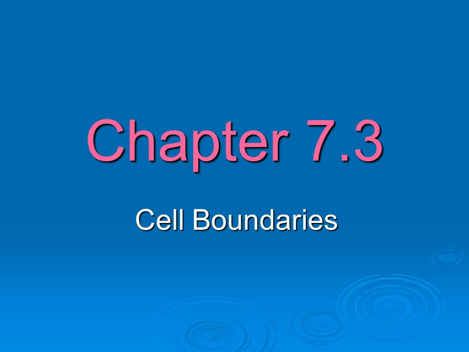 Chapter 7.3 Cell Boundaries