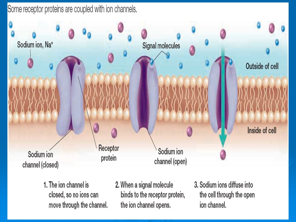 ion channels essay As mentioned in the case description, tetrodotoxin is a molecule that blocks voltage-gated sodium ion channels describe the structure of a sodium ion a sodium ion is a sodium ion that has been oxidized, which means losing one electron and gaining a positive charge.