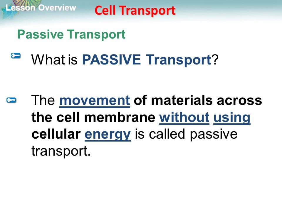 Lesson Overview Lesson Overview Cell Transport Passive Transport What is PASSIVE Transport.