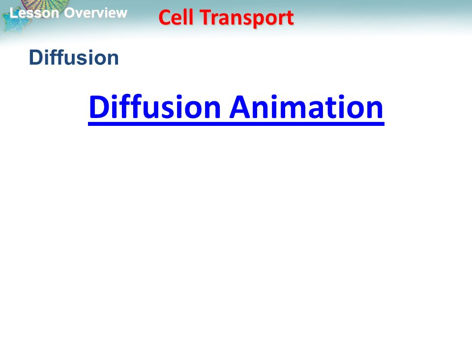 Lesson Overview Lesson Overview Cell Transport Diffusion Diffusion Animation
