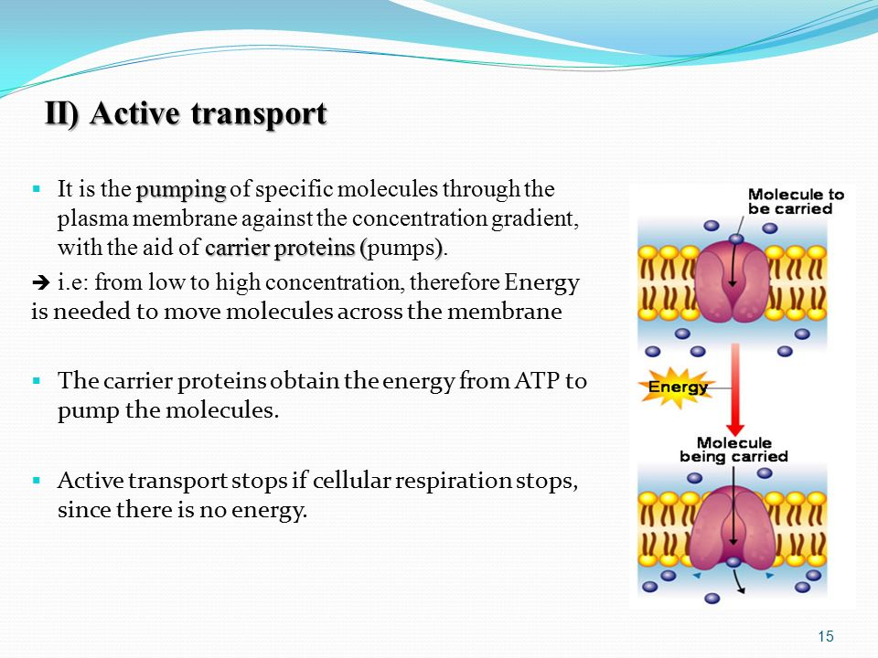 II) Active transport pumping carrier proteins ()  It is the pumping of specific molecules through the plasma membrane against the concentration gradient, with the aid of carrier proteins (pumps).