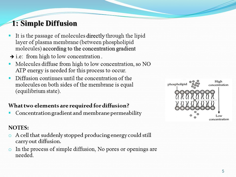 1: Simple Diffusion directly according to the concentration gradient  It is the passage of molecules directly through the lipid layer of plasma membrane (between phospholipid molecules) according to the concentration gradient  i.e: from high to low concentration.