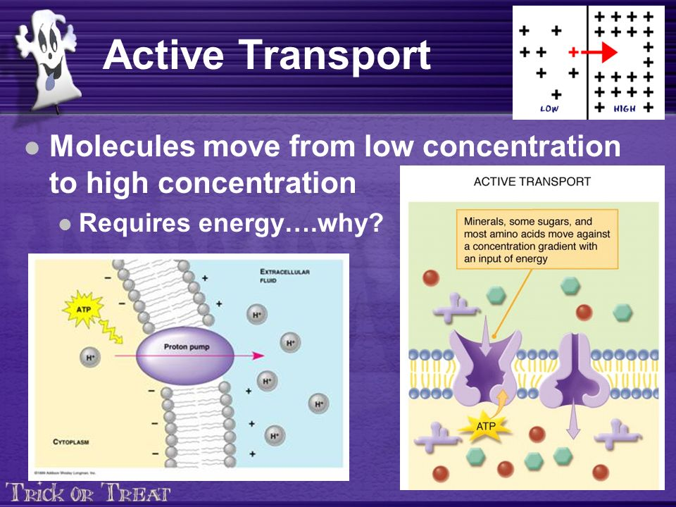 Active Transport Molecules move from low concentration to high concentration Requires energy….why