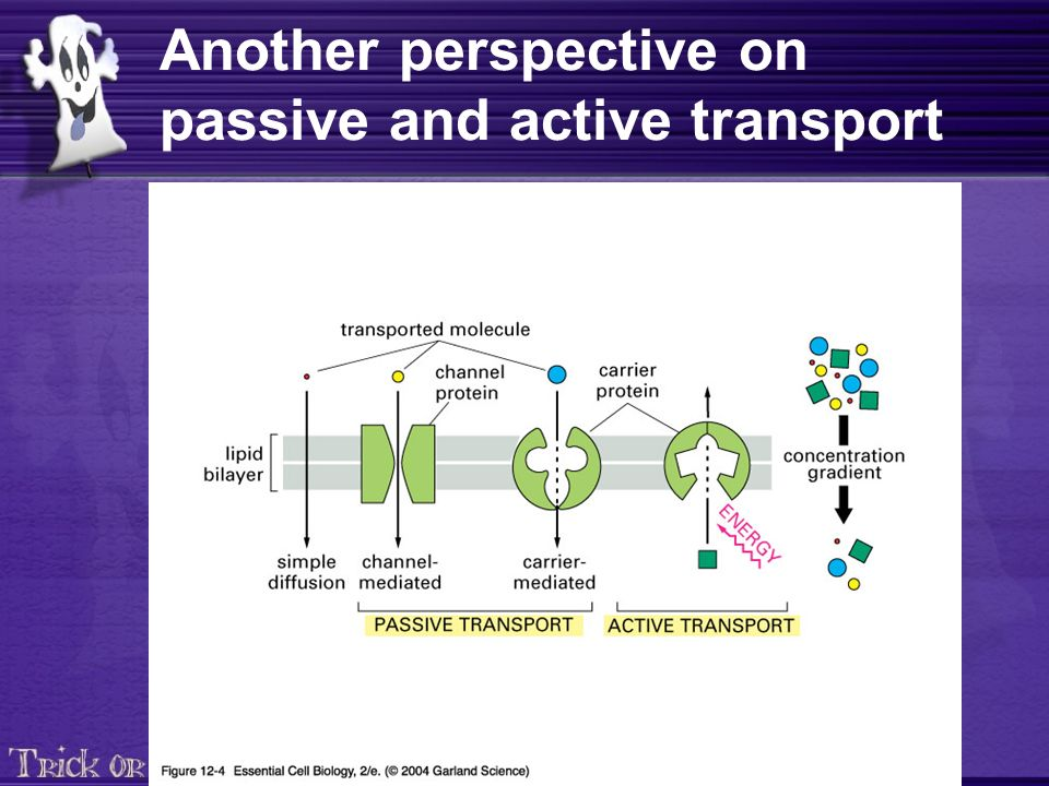 Another perspective on passive and active transport