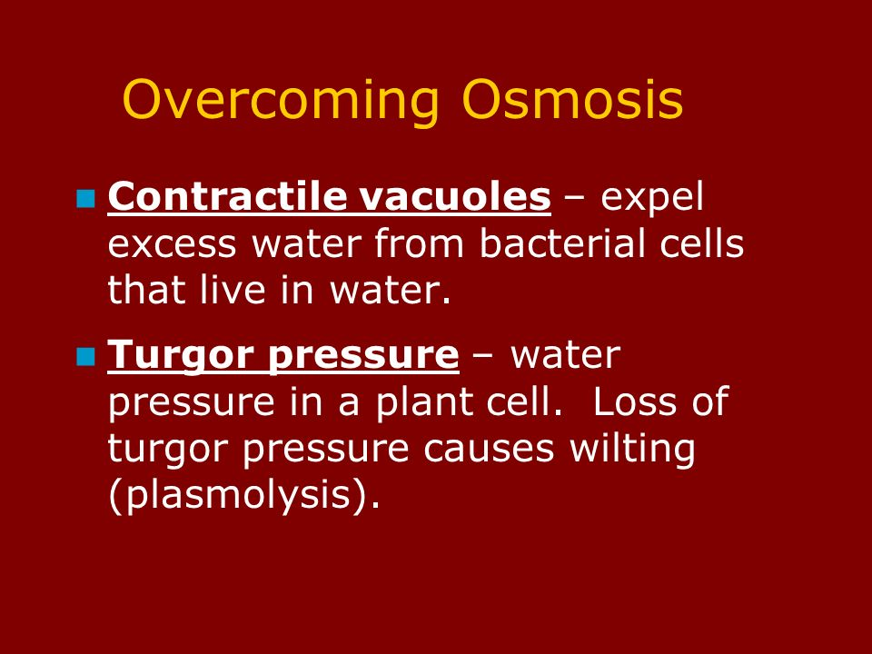 Overcoming Osmosis Contractile vacuoles – expel excess water from bacterial cells that live in water.