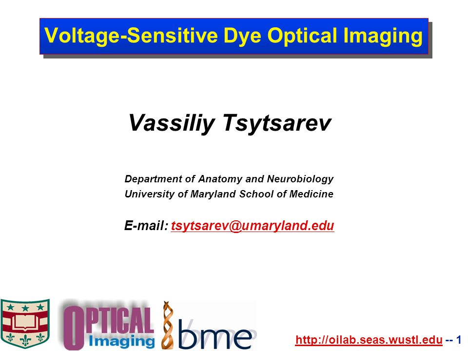 1 Voltage Sensitive Dye Optical Imaging Vassiliy Tsytsarev
