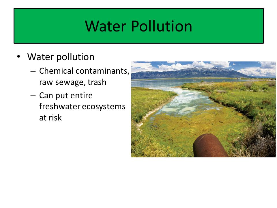 Water Pollution Water pollution – Chemical contaminants, raw sewage, trash – Can put entire freshwater ecosystems at risk
