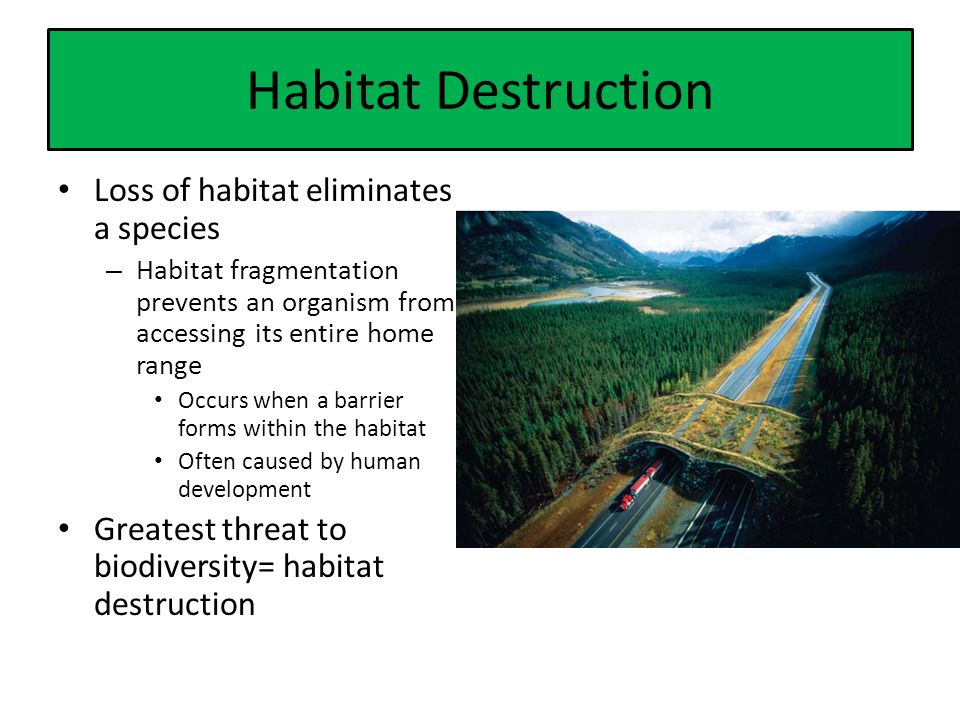 Habitat Destruction Loss of habitat eliminates a species – Habitat fragmentation prevents an organism from accessing its entire home range Occurs when a barrier forms within the habitat Often caused by human development Greatest threat to biodiversity= habitat destruction