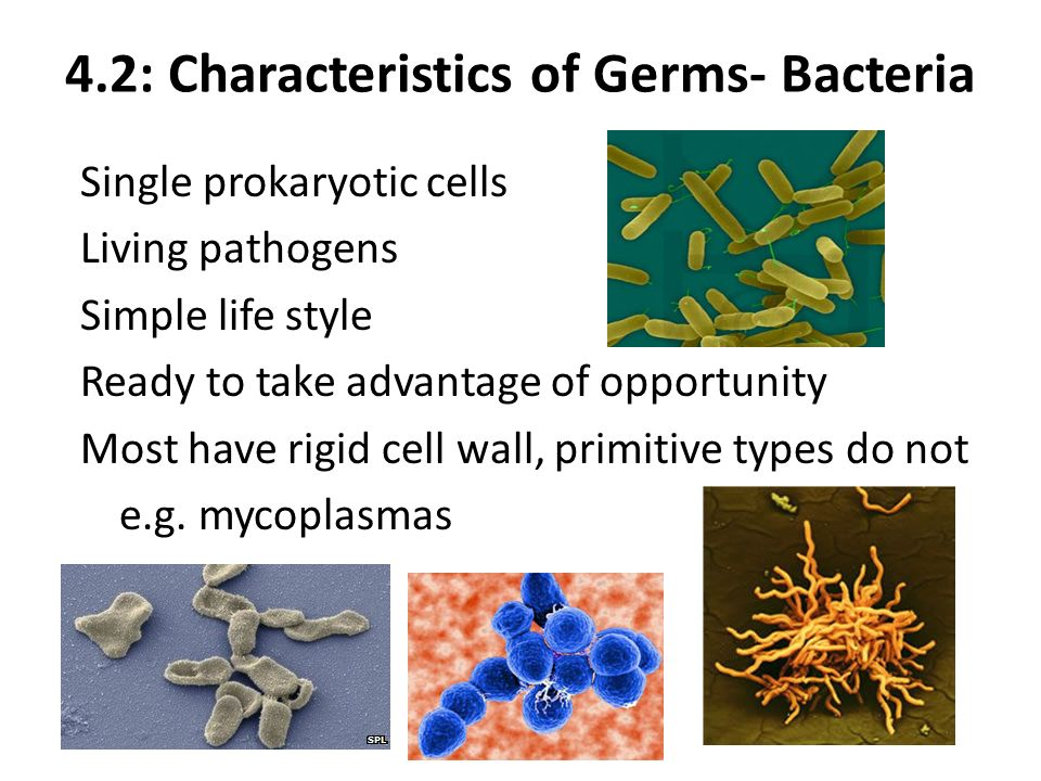 42 characteristics of germs bacteria single prokaryotic cells living pathogens simple life style ready