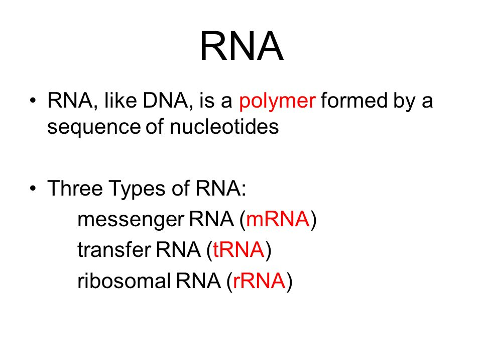 RNA RNA, like DNA, is a polymer formed by a sequence of nucleotides Three Types of RNA: messenger RNA (mRNA) transfer RNA (tRNA) ribosomal RNA (rRNA)
