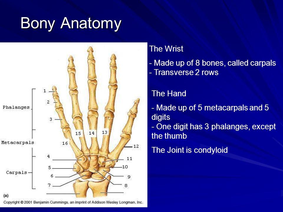 The Wrist & Hand. Bony Anatomy The Wrist - Made up of 8 bones ...