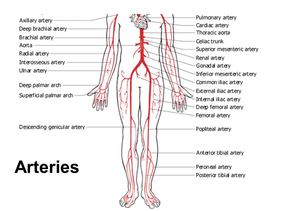 Peripheral Vascular Disease Peripheral Artery Disease Peripheral