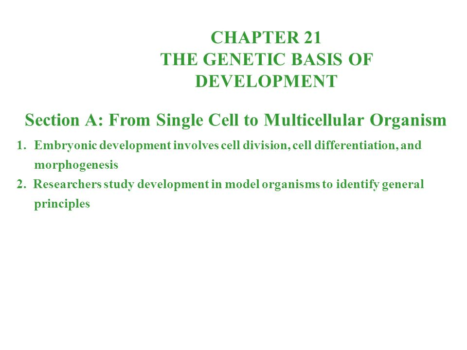 CHAPTER 21 THE GENETIC BASIS OF DEVELOPMENT Section A: From Single Cell to Multicellular Organism 1.Embryonic development involves cell division, cell differentiation, and morphogenesis 2.