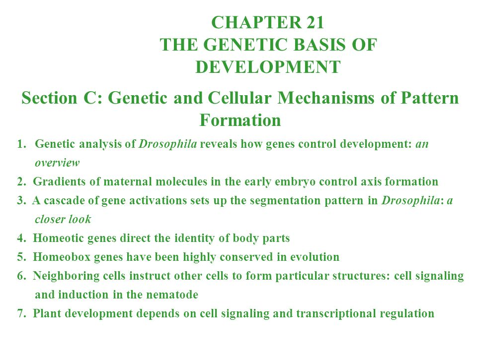 CHAPTER 21 THE GENETIC BASIS OF DEVELOPMENT Section C: Genetic and Cellular Mechanisms of Pattern Formation 1.Genetic analysis of Drosophila reveals how genes control development: an overview 2.