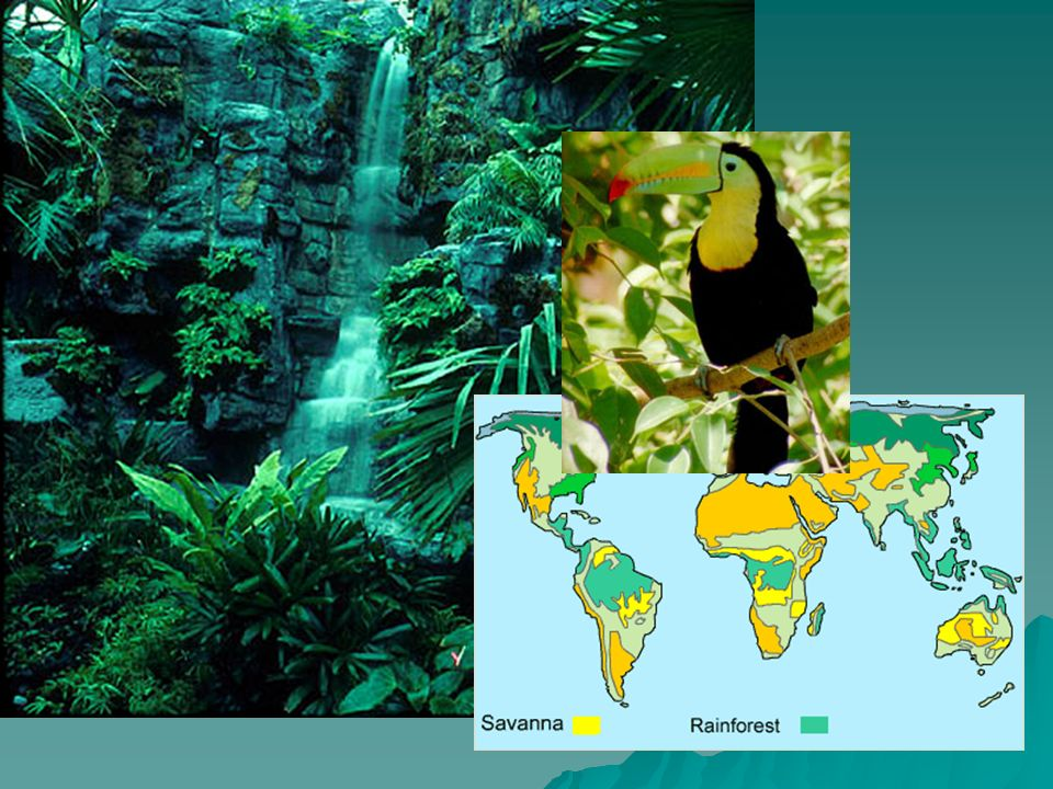 Terms to know  Ecology: study of interactions between organisms and their environment  Biosphere: part of earth where life exists  Biome: geographical region containing several ecosystems that have the same climate and dominant communities  Ecosystem: mixture of non-living and living factors in an environment.