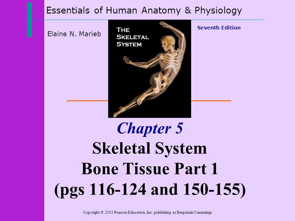 Essentials of Human Anatomy & Physiology Copyright © 2003 Pearson ...