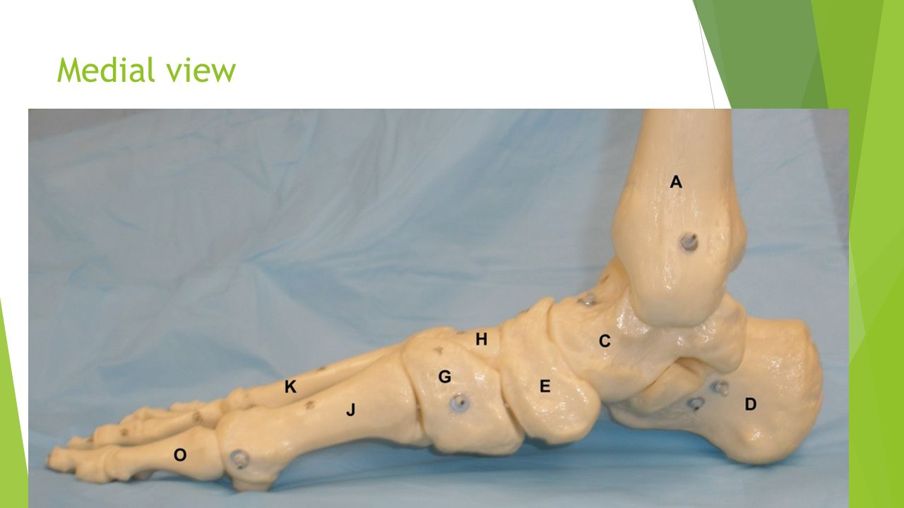 Ankle Bones And Ligaments Lateral Ankle Ligaments Ppt Download