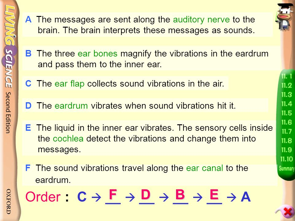 Activity Corner H p.94 How does the ear work. Read the sentences on the next page.