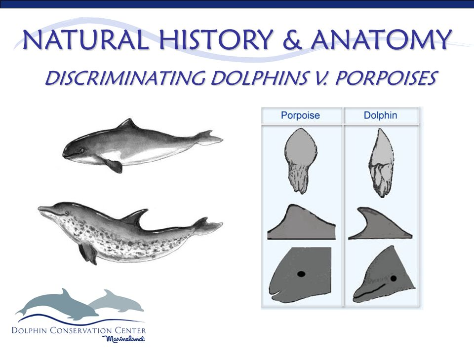 Natural History & Anatomy Sensory system impact on behaviors and ...