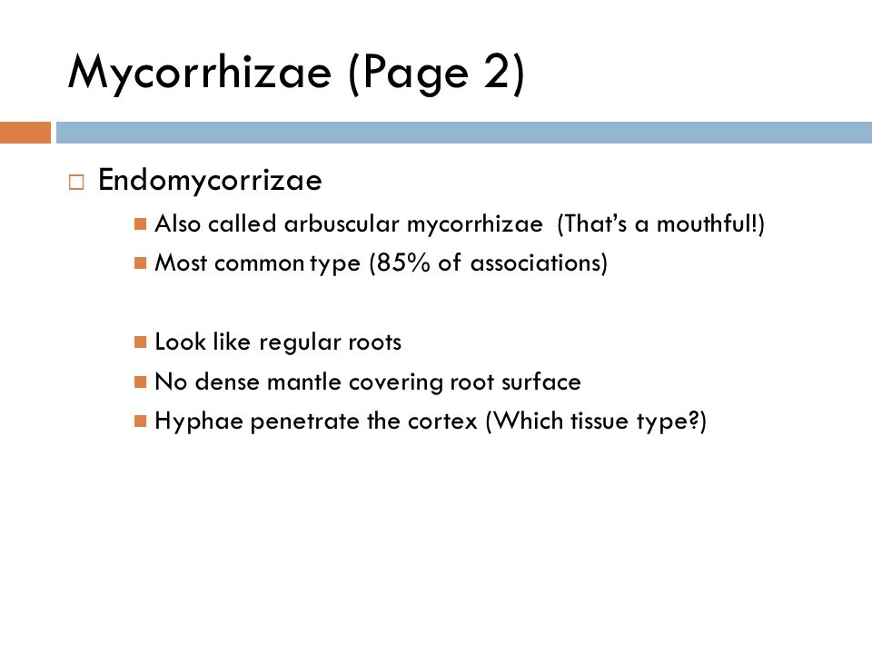 Mycorrhizae (Page 2)  Endomycorrizae Also called arbuscular mycorrhizae (That's a mouthful!) Most common type (85% of associations) Look like regular roots No dense mantle covering root surface Hyphae penetrate the cortex (Which tissue type )