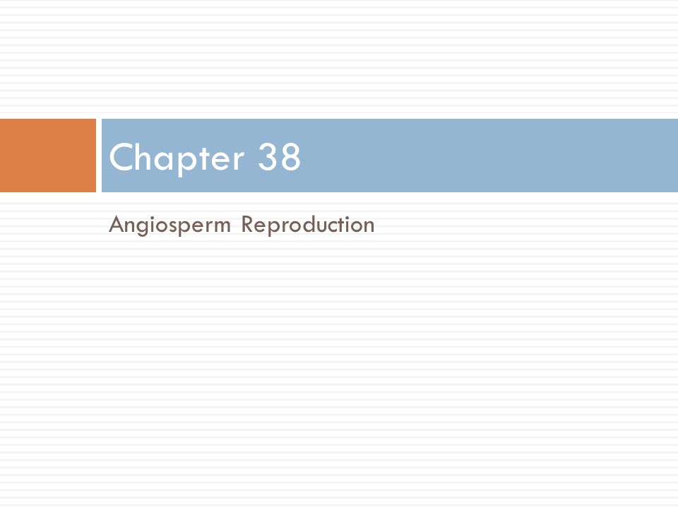 Angiosperm Reproduction Chapter 38