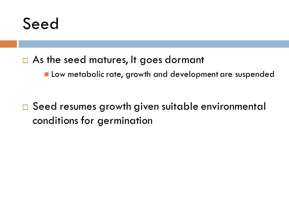Seed  As the seed matures, It goes dormant Low metabolic rate, growth and development are suspended  Seed resumes growth given suitable environmental conditions for germination