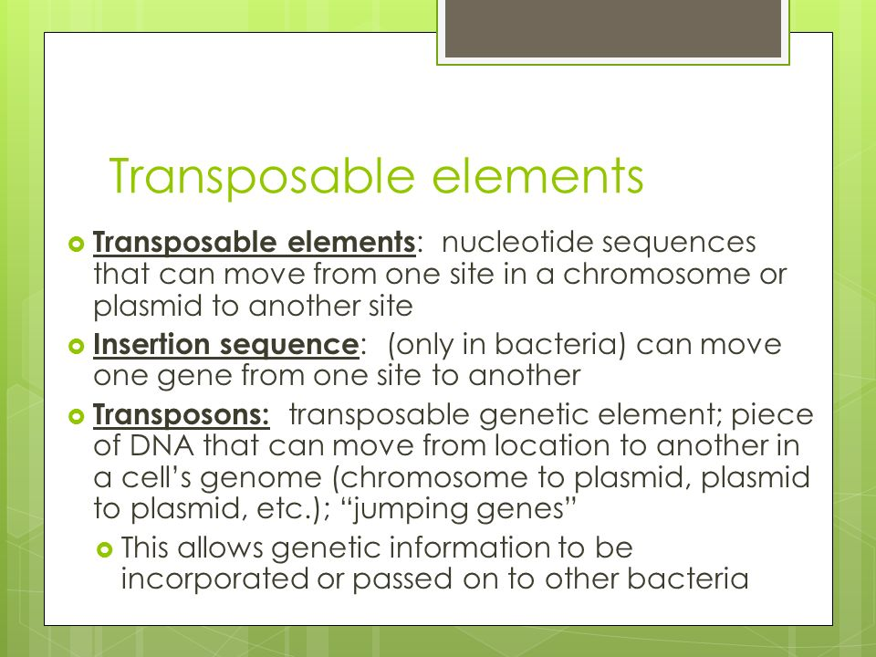 Transposable elements  Transposable elements : nucleotide sequences that can move from one site in a chromosome or plasmid to another site  Insertion sequence : (only in bacteria) can move one gene from one site to another  Transposons: transposable genetic element; piece of DNA that can move from location to another in a cell's genome (chromosome to plasmid, plasmid to plasmid, etc.); jumping genes  This allows genetic information to be incorporated or passed on to other bacteria