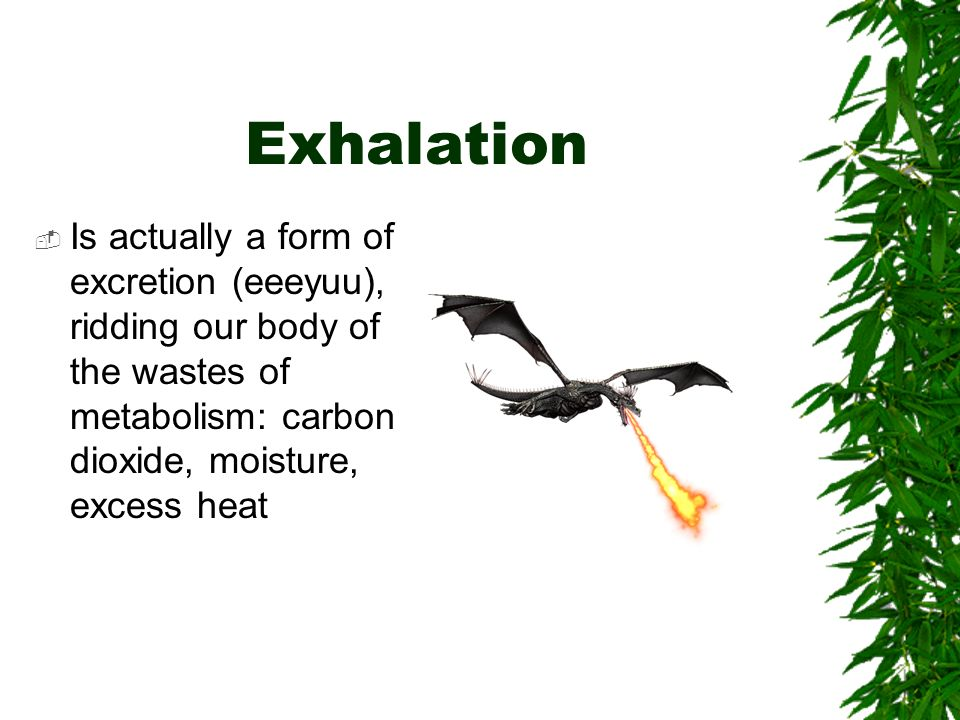 Exhalation  Is actually a form of excretion (eeeyuu), ridding our body of the wastes of metabolism: carbon dioxide, moisture, excess heat
