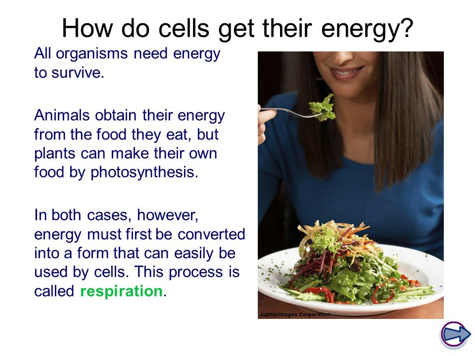 How do cells get their energy. All organisms need energy to survive.