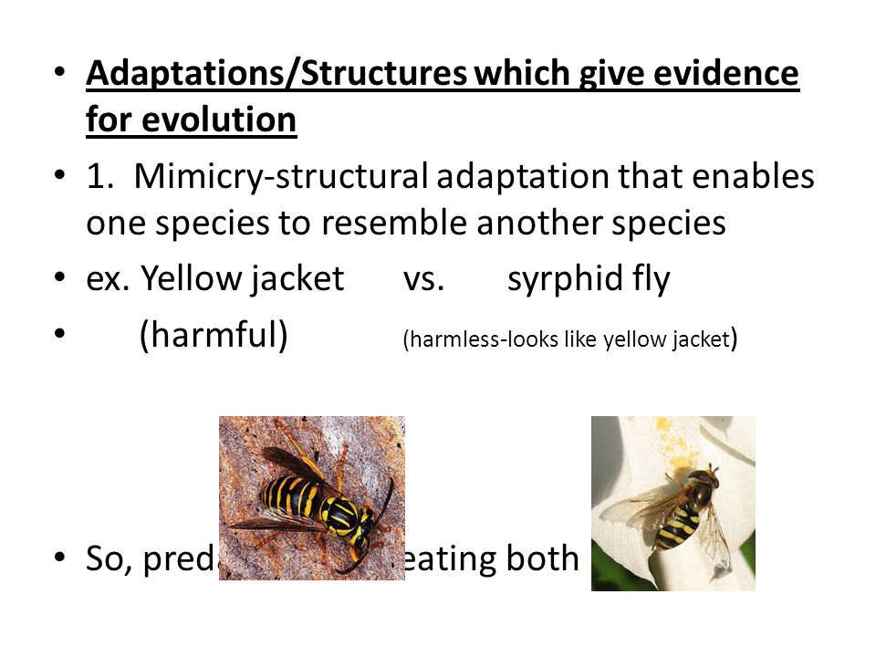Adaptations/Structures which give evidence for evolution 1.