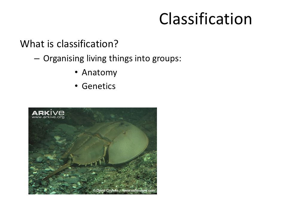 Classification. What is classification? – Organising living things ...